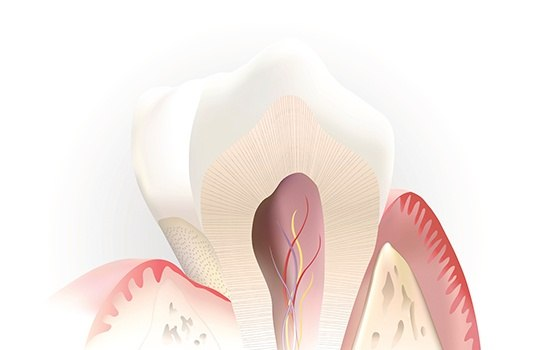Animated root canal and supportive structures